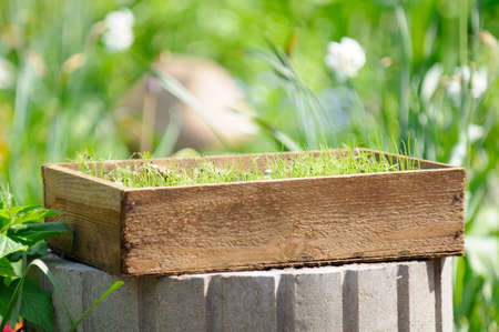 Wooden Crate with Seedlings in the Yard photo