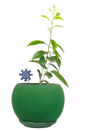 Young Plants in Green Flower Pot Isolated on White Background Stock Photo - 13737065