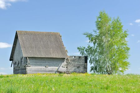 Unfinished Wooden Country House with Birch Tree photo