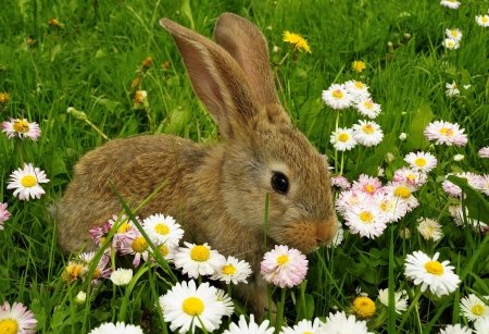 baby rabbit: Cute Rabbit in the Garden with Flowers