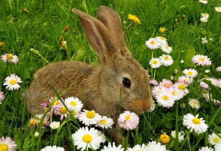 lapin: Lapin mignon dans le jardin avec des fleurs Banque d'images