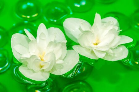 Delightful White Jasmine Flowers Floating on Water Stock Photo - 14289098