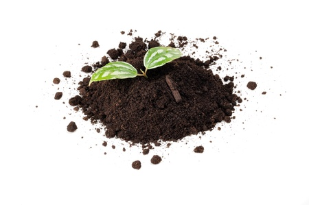 agricultural life: Green Plant in Pile of Soil Isolated on White Background
