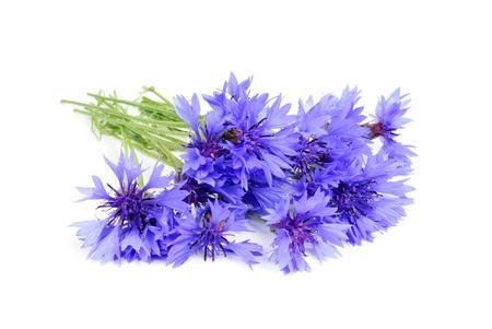 白い背景に分離された青のヤグルマギクの花束 写真素材