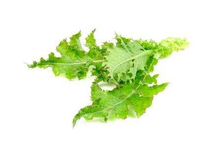 sow: Sow Thistle Plant Isolated on White Background Stock Photo