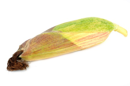 spadix: Corn on the Cob Isolated on White Background Stock Photo