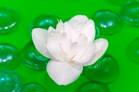 philadelphus: White Jasmine Flower Floating on Water Stock Photo