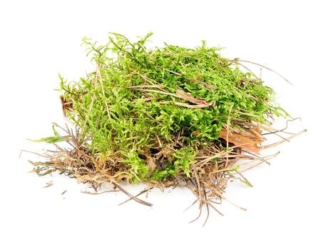 Clump of Green Moss Isolated on White Background photo