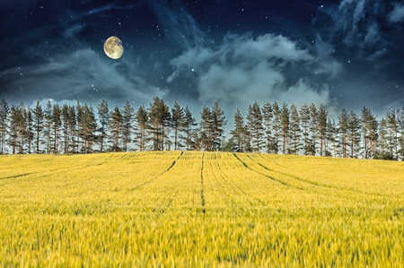 Mysterious Landscape – Yellow Field, Pine Trees, Moon and Dark Night Sky photo