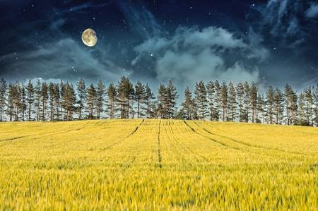 Mysteus Landscape – Yellow Field, Pine Trees, Moon and Dark Night Sky Stock Photo - 15536101