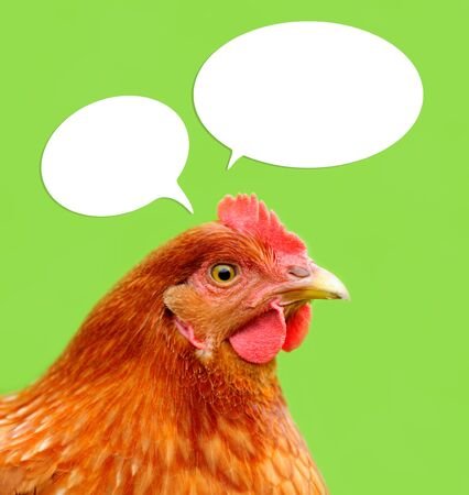 Red Chicken with Thought Balloons on Green Background Stock Photo - 15684765