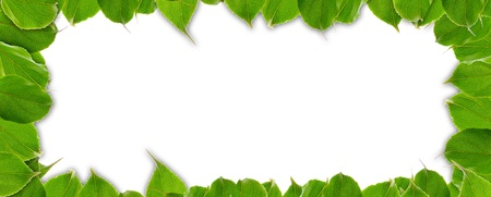 Summer Frame of Green Leaves Stock Photo - 15684778