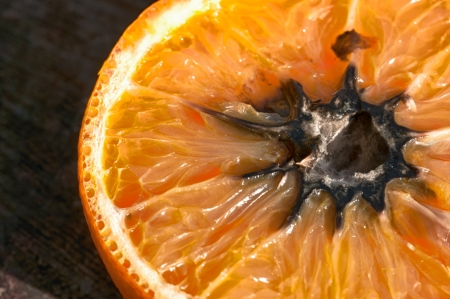 putrefied: Rotten Orange with Mold (HDR Image) Stock Photo