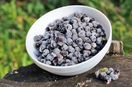 Frozen Bilberries in Bowl on Tree Stump Stock Photo - 15743798