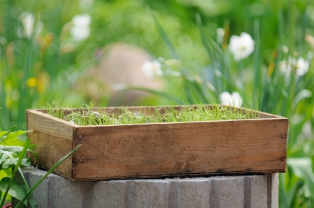 Wooden Crate with Seedlings in the Garden photo