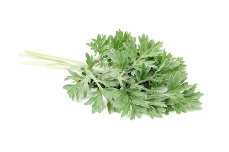 herbalism: Wormwood Isolated on White Background