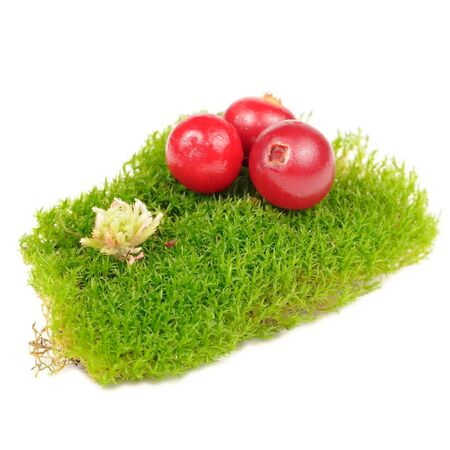 clump: Cranberries on Clump of Green Moss Isolated on White Background