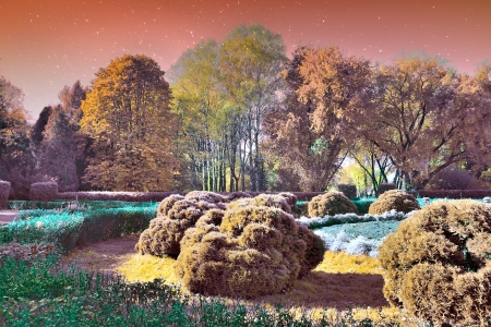 Magic Landscape Garden photo