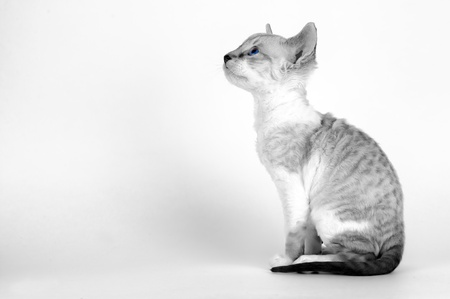 Cute Kitten with Bright Blue Eyes and Copy Space Stock Photo - 16212959