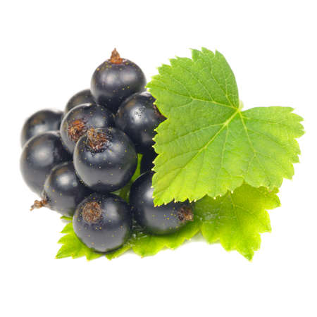 currant: Blackcurrant with Green Leaves Isolated on White Background