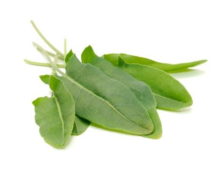 Green Sorrel Leaves Isolated on White Background Standard-Bild