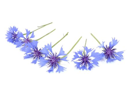 bachelor s button: Beautiful Blue Cornflowers Isolated on White Background Stock Photo
