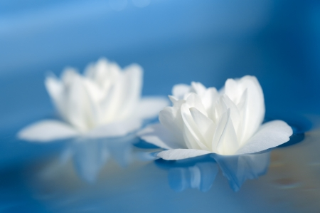 Beautiful White Jasmine Flowers Floating on Blue Water photo