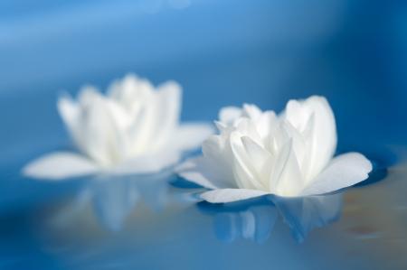 Beautiful White Jasmine Flowers Floating on Blue Water Stock Photo - 17006456