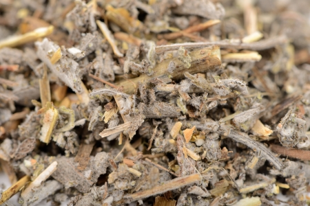 dried herbs: Dried Salvia Officinalis (Sage) Herb Close-Up