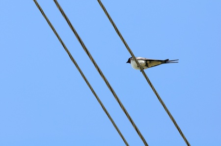 Swallow Sitting on Wire Against Blue Sky Stock Photo - 17898312