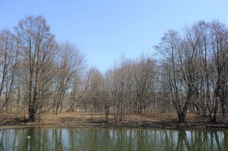 bare trees: Bare Trees by River in Spring