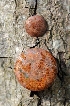 rusty nail: Rusty Nails in Tree Stock Photo