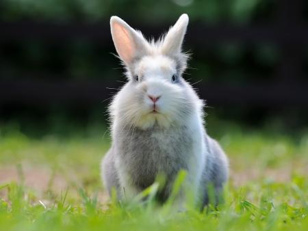 bunnie: Cute Fluffy Rabbit Stock Photo