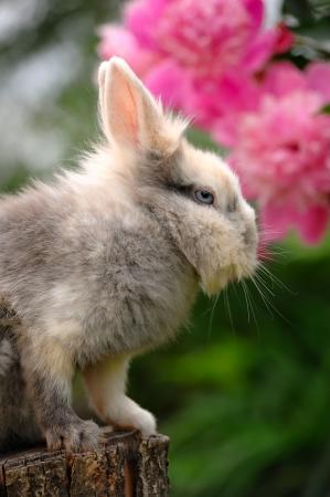 bunnie: Fluffy Rabbit on Tree Stump Stock Photo