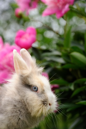 bunnie: Fluffy Rabbit in the Garden with Flowers