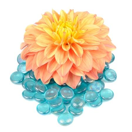 Beautiful Orange Dahlia with Blue Glass Stones Isolated on White Background photo