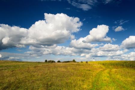野草: Wild Grass Field in Autumn 写真素材
