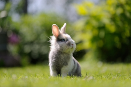 Cute Fluffy Rabbit Outdoors on Green Grass photo
