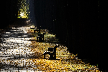 Empty Benches in Park in Autumn photo