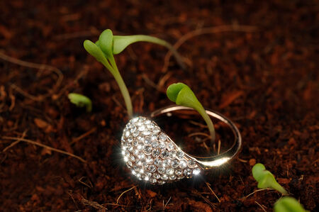 precious gem: Gold Ring with Cubic Zirconia on the Ground with Green Plants Stock Photo