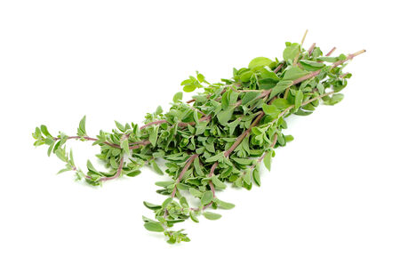 marjoram: Bunch of Marjoram Herb Isolated on White Background