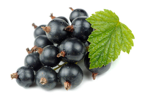 Blackcurrants with Green Leaf Isolated on White Background photo