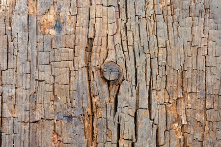 crackles: Cracked Wood Texture with Knot