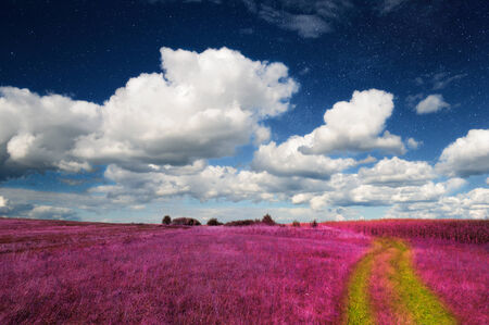 Magic Landscape Pink Field and Sky with Real Stars photo