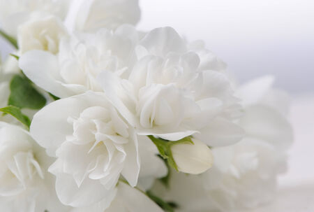 philadelphus: A close-up of beautiful white jasmine flowers with copy space