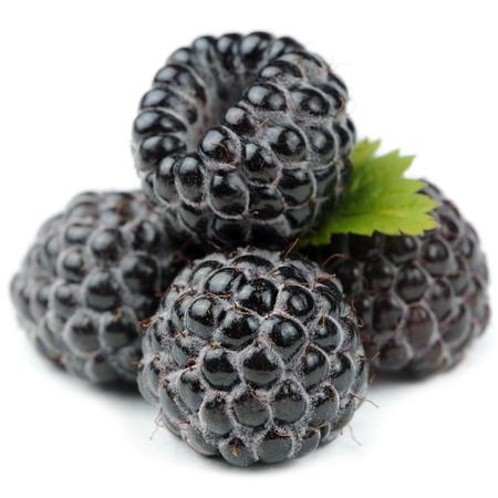 Blackberry avec Green Leaf Close-Up isolé sur fond blanc Banque d'images - 28838407