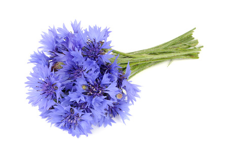 bachelor s button: Bouquet of Blue Cornflowers Isolated on White Background Stock Photo