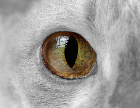 Cat Eye Close-Up photo