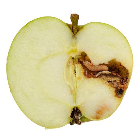 worm: Un gusano (gusano de la manzana larva) comiendo una manzana cortada en la mitad aislado en un fondo blanco