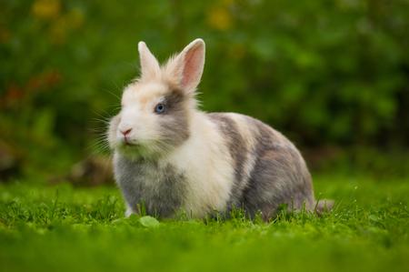 bunnie: Cute Fluffy Rabbit on Green Grass